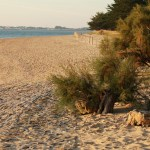 Gites de france vendée : location de vacances en Vendée