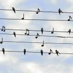 Chorale-chant : chorales de la région Paca