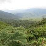 MagVoyage : a la découverte de la nature du Costa Rica