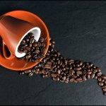 Tasseacafe : le guide à connaître sur le café