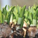 Ernest Truc : producteur de bulbes et de semences
