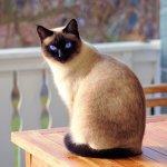 Assurance.chat : tout savoir sur l'assurance pour chat