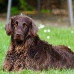 Collier-de-dressage : comparatif de colliers de dressage pour chiens