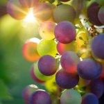 Tsallin : astuces et conseils pour choisir les vins de son mariage