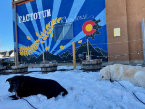 Fabi and Lucy laying in the snow on the patio at Factotum Brewhouse