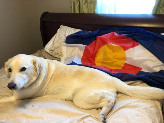 Lucy and the Colorado flag