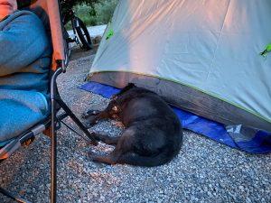 Fabi sleeps on the ground next to the tent