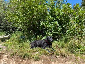 Fabi at Lost Lake