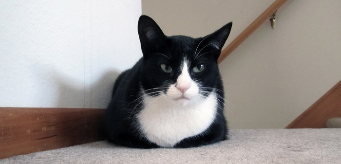 January 10th. Mouser is not amused.
