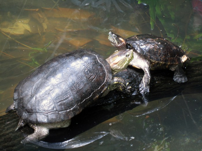 March 10th: Turtles.
