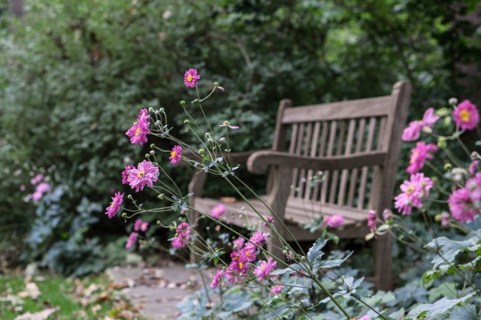 September 27th - Flower and Bench