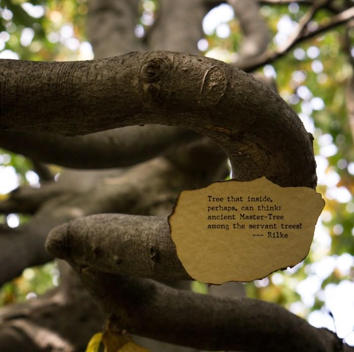 Master Tree