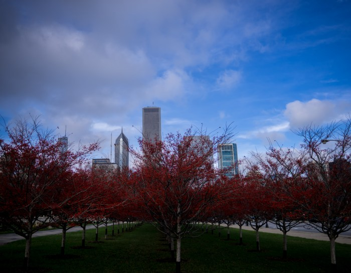 Trees and Skyscrapers