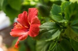 Dec 14: Flower