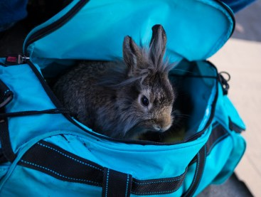 Dec. 27th: Bunny