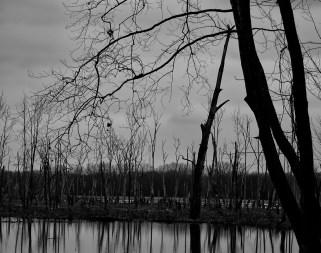 February 5th: Swamp
