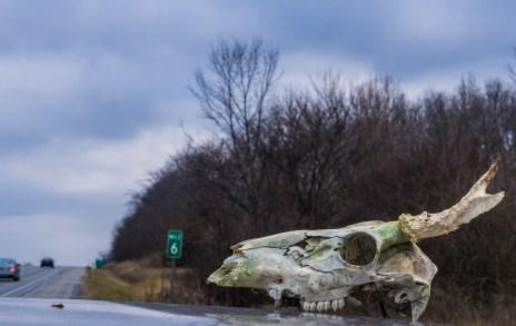 February 4th: Skull