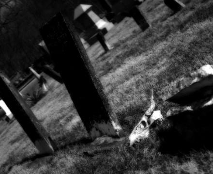 Feb 19: Cemetery