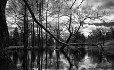 March 4: Spring Grove Cemetery