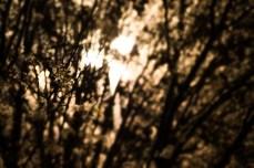 April 1: Night Blossom