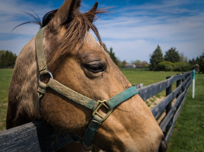 May 3: Horse