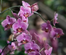 May 13th: Orchid