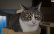 Dec 1st: Kitty