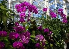 Feb 25: Orchids at IMA