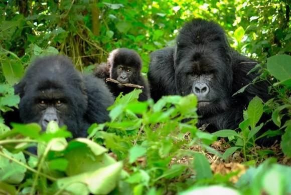 The best wildlife encounters in Rwanda