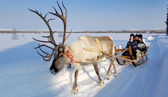 Reindeer sledging © Discover the World
