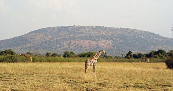 Akagera National Park © Sarah Hall/African Parks