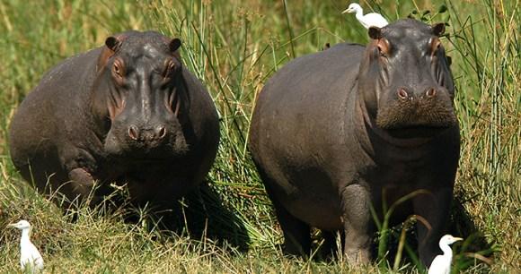 Liwonde National Park, Malawi by Dana Allen, Central African Wilderness Safaris