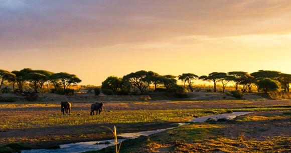 Elephants, Ruaha National Park, Tanzania by Brian Harries, Wikimedia Commons