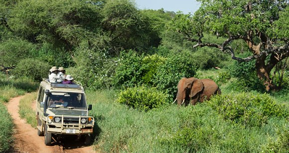 Tarangire National Park Tanzania by Ariadne Van Zandbergen