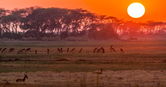 Kafue National Park Zambia by Catherina  Unger, Dreamstime