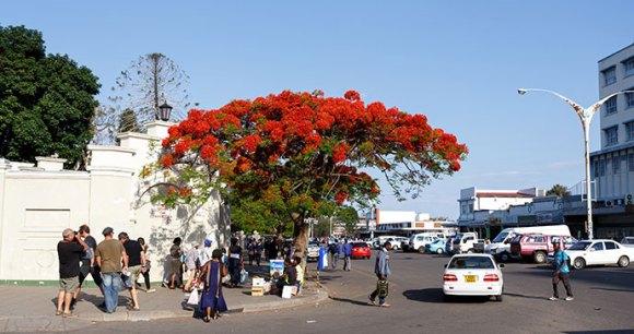 Bulawayo Zimbabwe by Artush Shutterstock