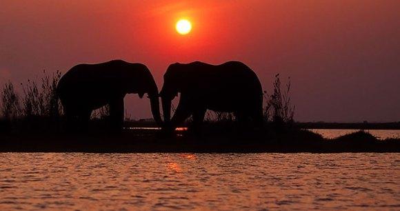 Elephants Zimbabwe Africa by Shutterstock, EcoPrint
