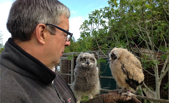 Exmoor Owl & Hawk Centre Somerset by Exmoor Owl & Hawk Centre best family days out somerset