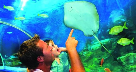 Bluereef Aquarium, Sussex, England by Blue Reef Aquarium