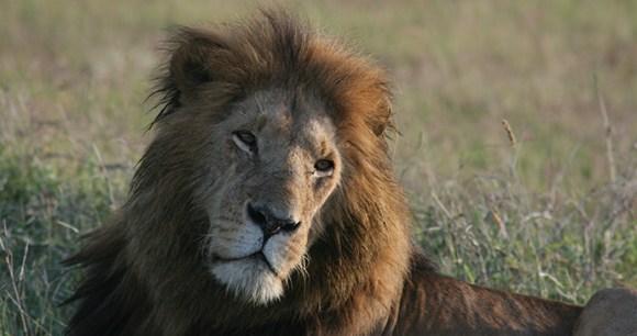 Lion Chyulu Hills and Mara by Brian Jackman
