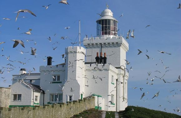 Coquet Island Northumberland British Isles by Paul Morrison RSPB