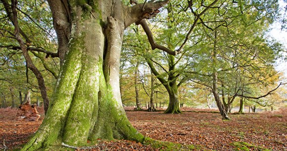 Tree New Forest National Park England UK by Ollie Taylor Shutterstock