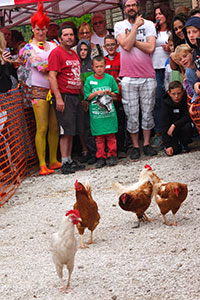 World Championship Hen Racing © Richard Bradley