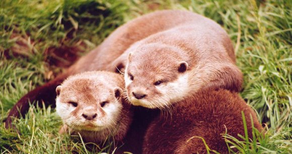 Otters and Butterflies Buckfastleigh South Devon British Isles by
