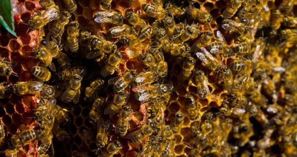 Quince Honey Farm North Devon UK by Flickr