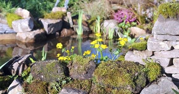 Harrogate Flower Show Yorkshire Dales England by Harrogate Flower Show