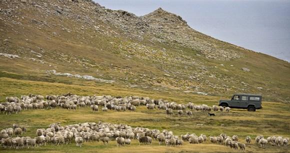Farming, Carcass Island, Falkland Islands by Steve Allen, Shutterstock