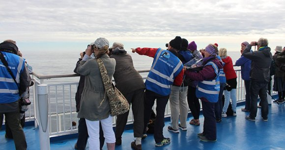 Whale watching, Bay of Biscay, 52 European Wildlife Weekends by ORCA