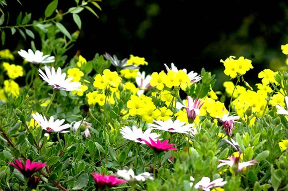 Wild flowers North Cyprus by North Cyprus Tourism