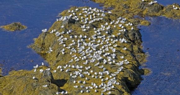 Látrabjarg, Iceland by BMJ, Shutterstock